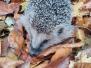 vzpomínka na ježčího kamaráda...